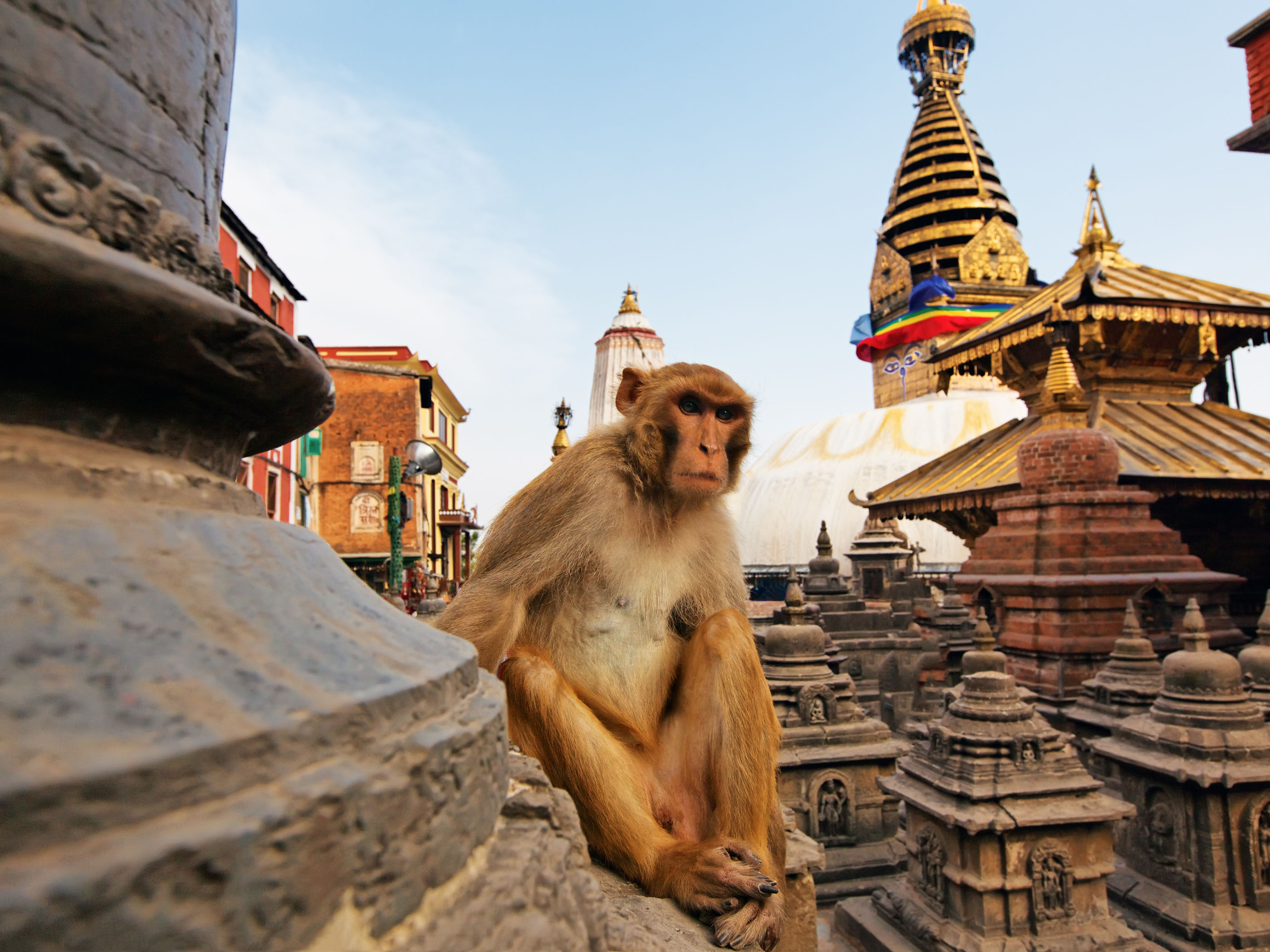 monkey-on-swayambhunath-stupa-kathmandu-nepal