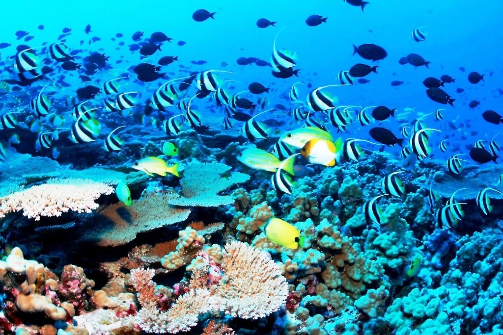 54d38081f358154d38081b0f01koh-samui-coral-reef-file0
